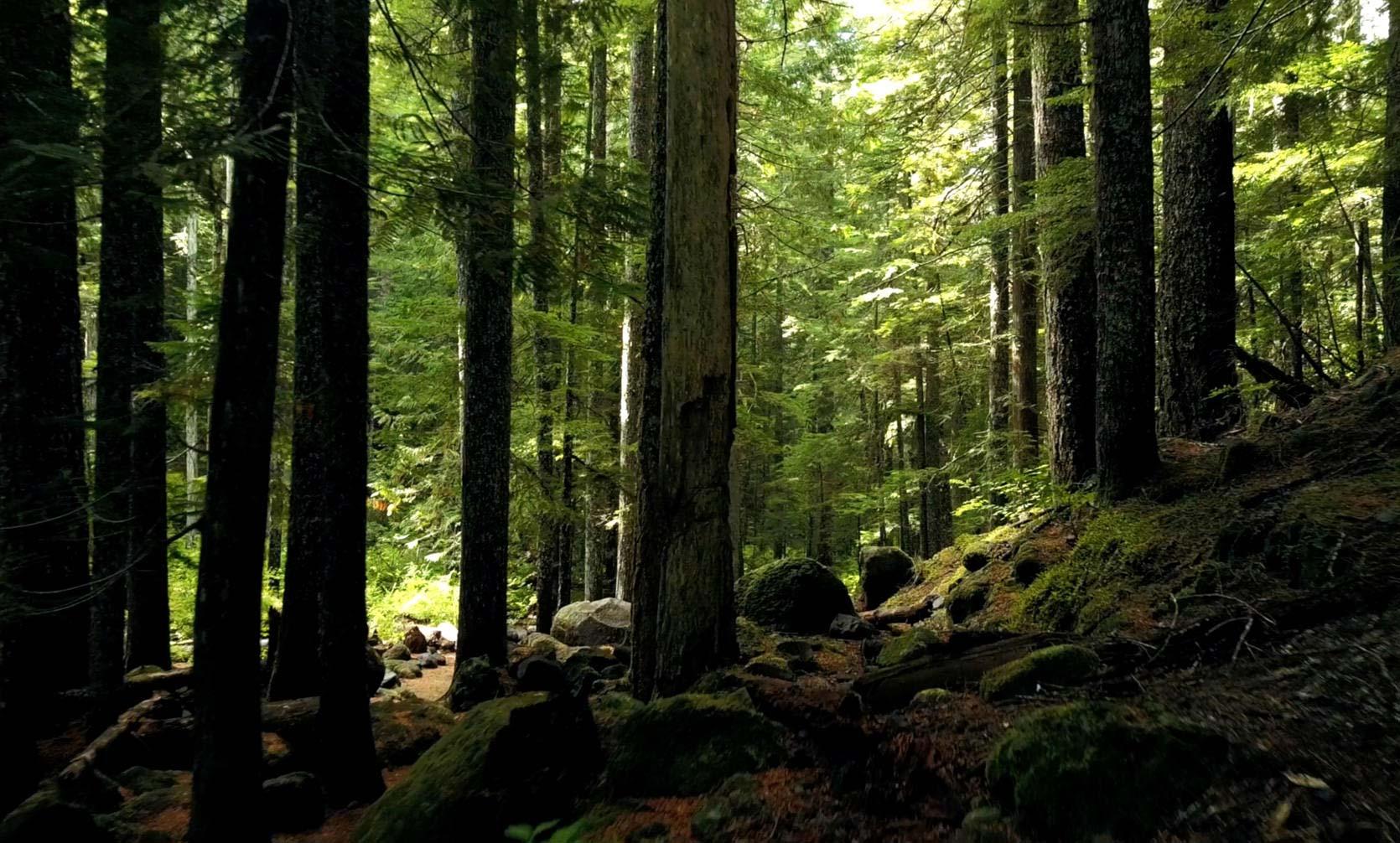 bosque sostenibilidad torresol